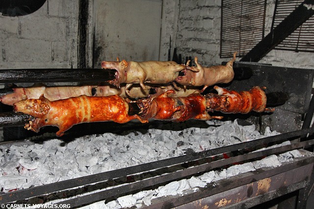 Cochon d'inde cuy Cuenca Equateur