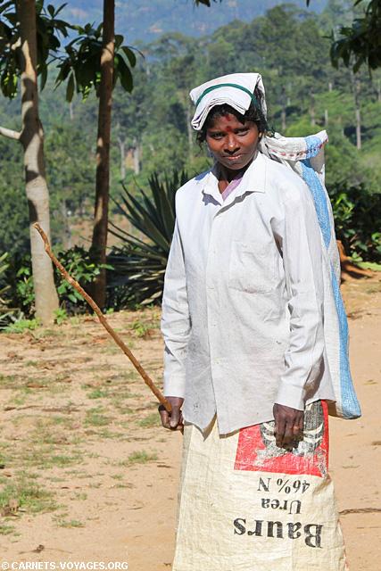 Cueilleuse de thé tamoul Ella Sri Lanka