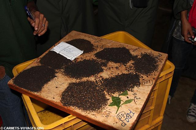 Fabrique de thé d'Halpewatte Sri Lanka