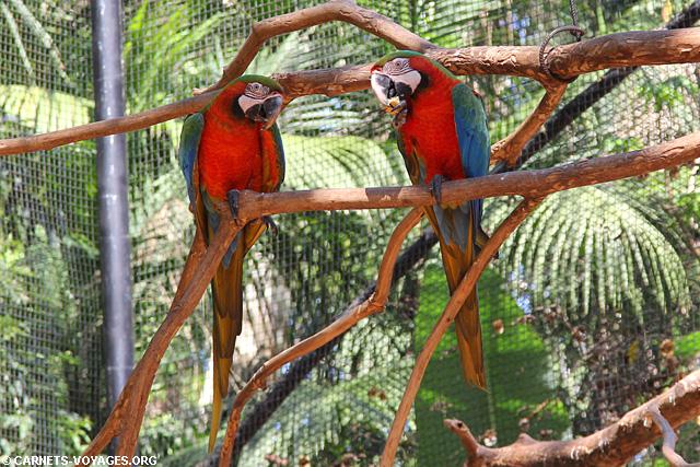 Parc oiseaux chutes Iguaçu Brésil