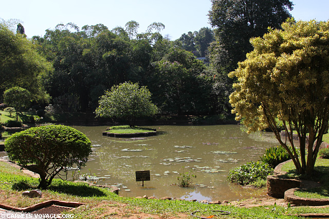 Jardin botanique Kandy Sri Lanka
