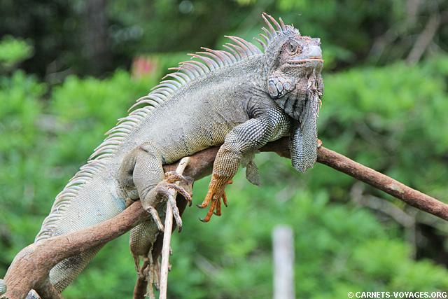 Ferme Kekoldi réserve bribri Costa Rica