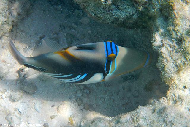 Snorkelling Makunudu Island Maldives