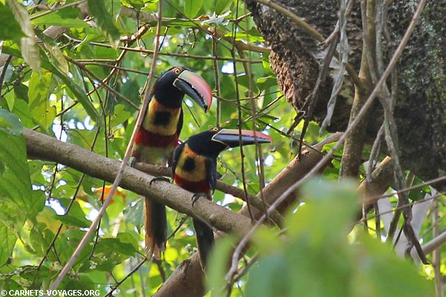 Toucan Parc Manuel Antonio Costa Rica