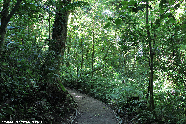 Sentier Réserve Monteverde Costa Rica