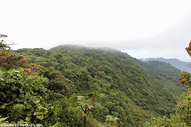 foret nuage Réserve Monteverde Costa Rica
