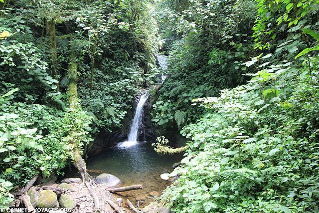 Réserve Monteverde Costa Rica