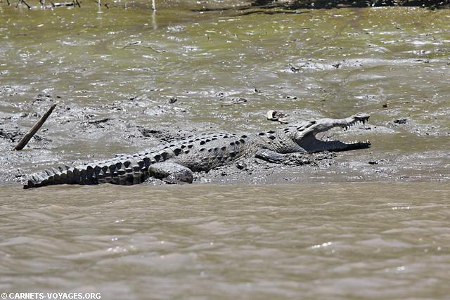 Crocodile Tour rivière Palo Verde Costa Rica