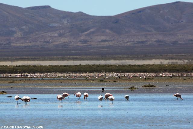 Lagune Los Pozuelos Argentine