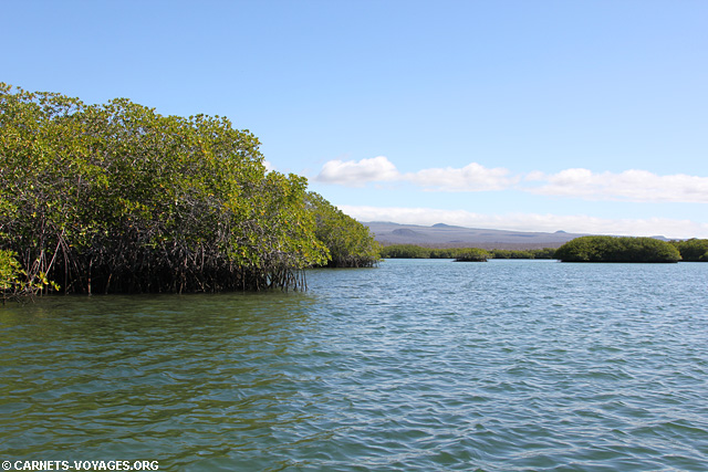 Ile Santa Cruz Galapagos