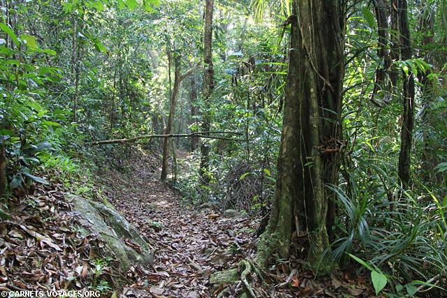 Foret Sinharaja Sri Lanka