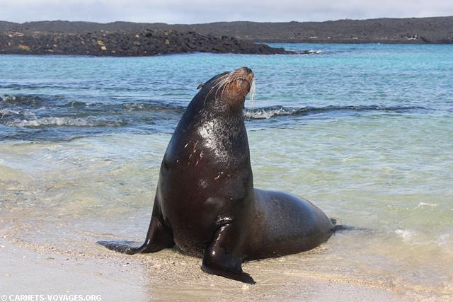 Ile Sombrero Chino Galapagos