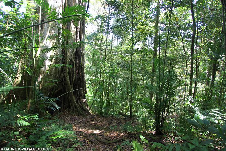 Réserve Cerro El Arenal Matagalpa Nicaragua