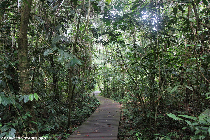 Parc Gunung Mulu visiter Bornéo Malaisie
