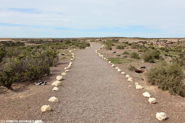 Punta Tombo Argentine