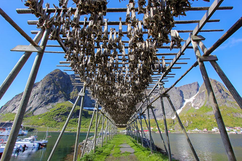 Morue séchée Reine Lofoten
