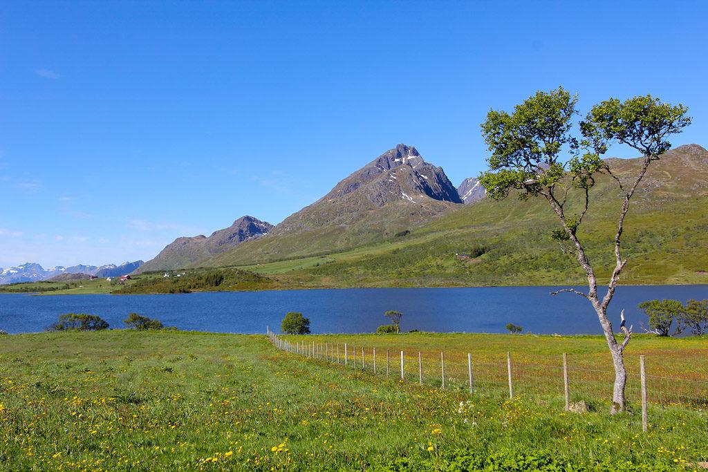 Road trip Lofoten
