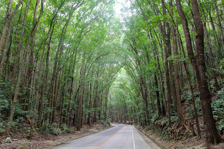 Bilar Man-Made Forest acajou
