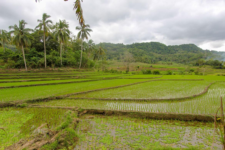 Bohol rizieres en terrasses de Pilar