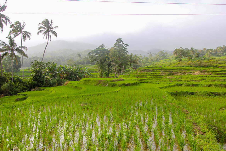 Bohol rizieres en terrasses