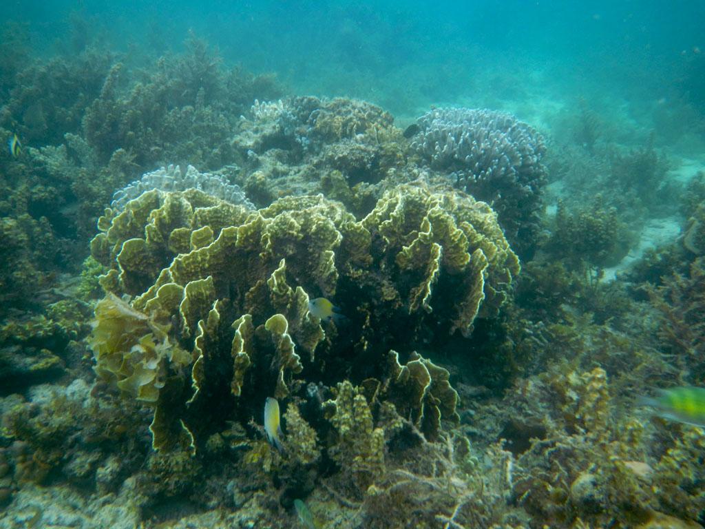 Snorkeling tour A Port Barton