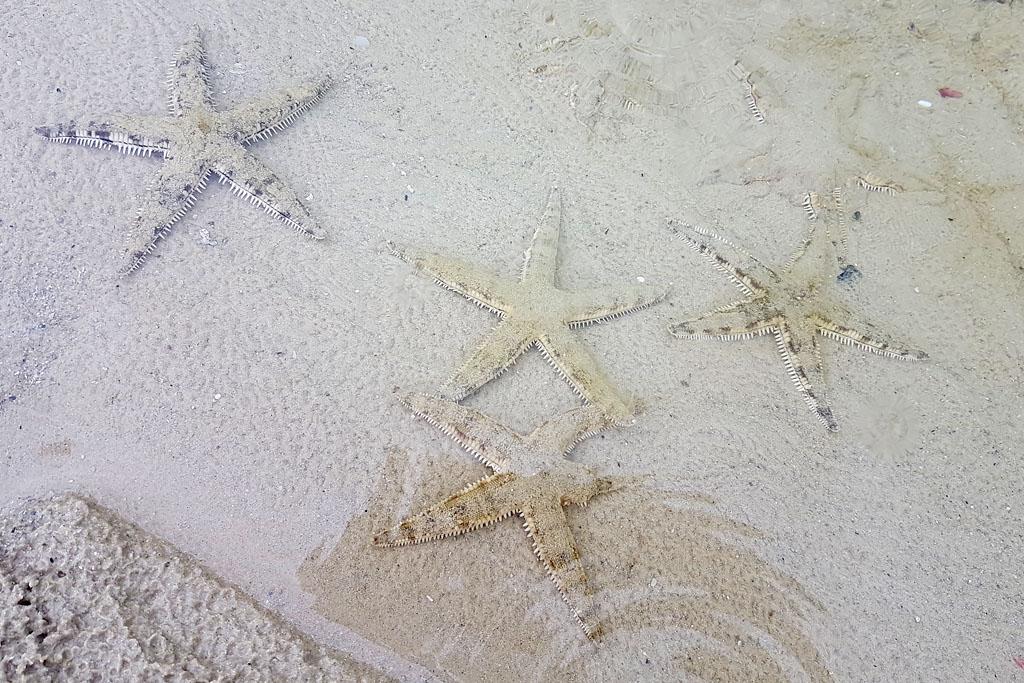 Port Barton étoile de mer