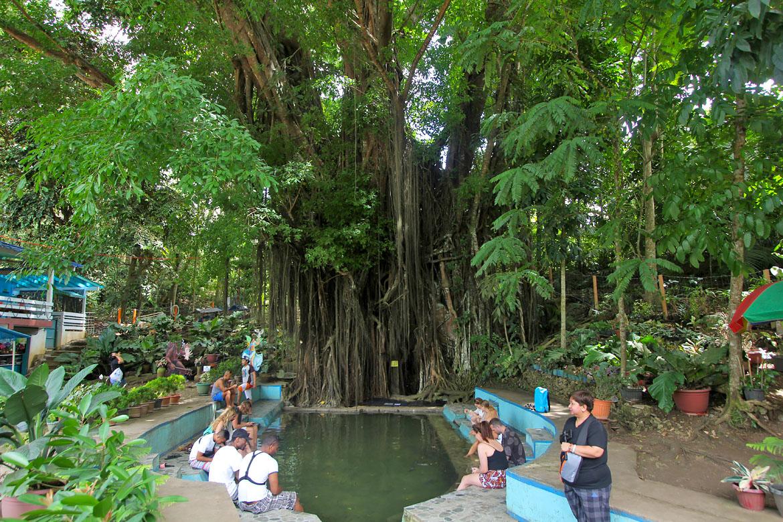 Siquijor Banyan Tree Balete