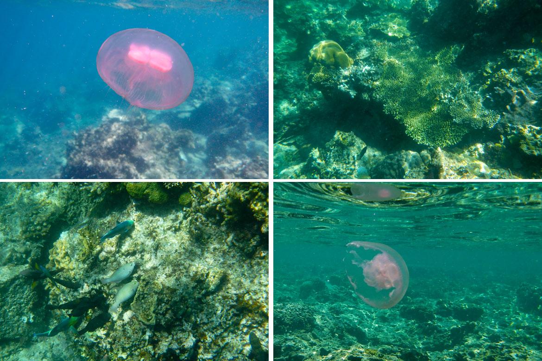 Snorkeling tour A El Nido