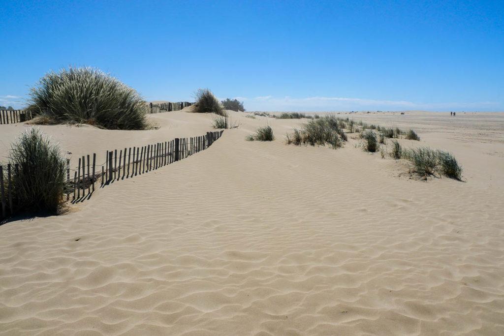 Dune de sable plage de l'espiguette Grau du Roi