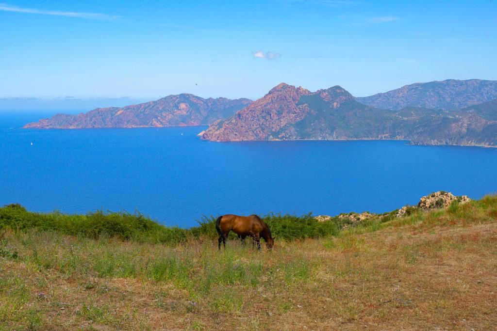 Vue sur les calanques de Piana depuis le village de Piana en Corse