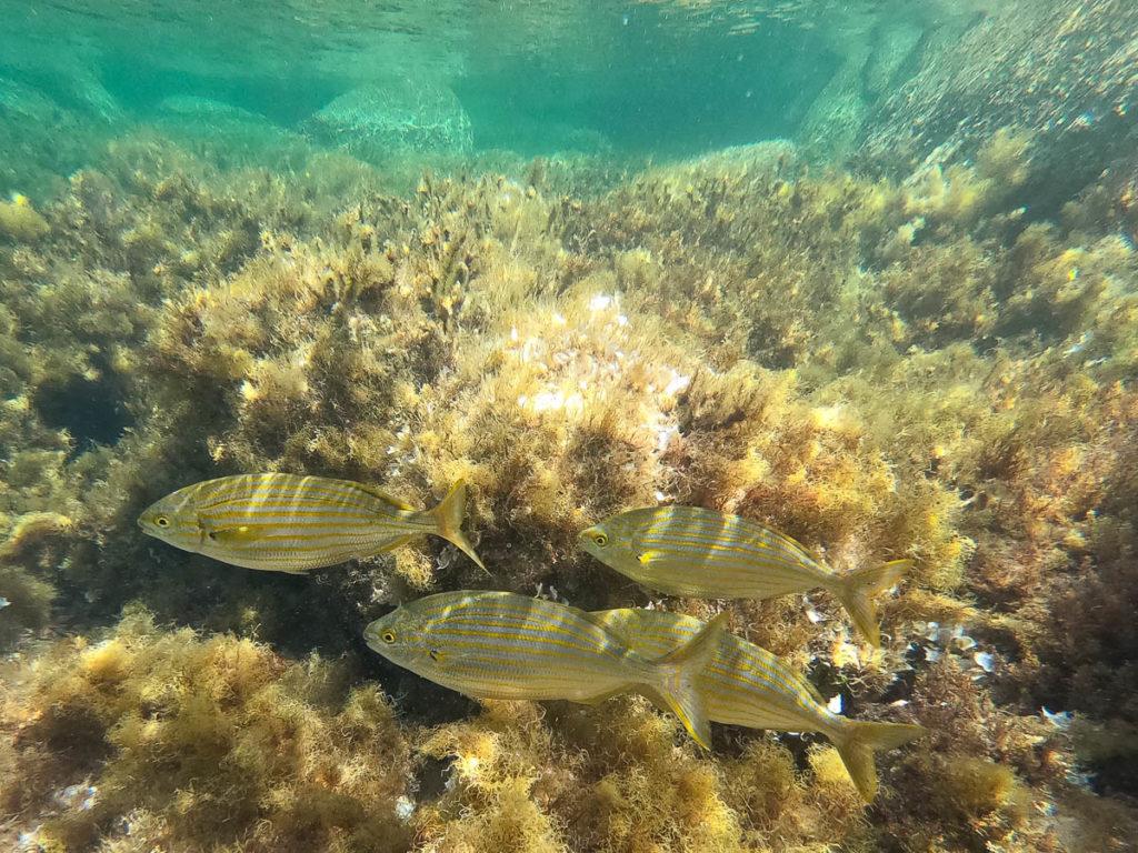 Snorkeling iles Lavezzi Corse